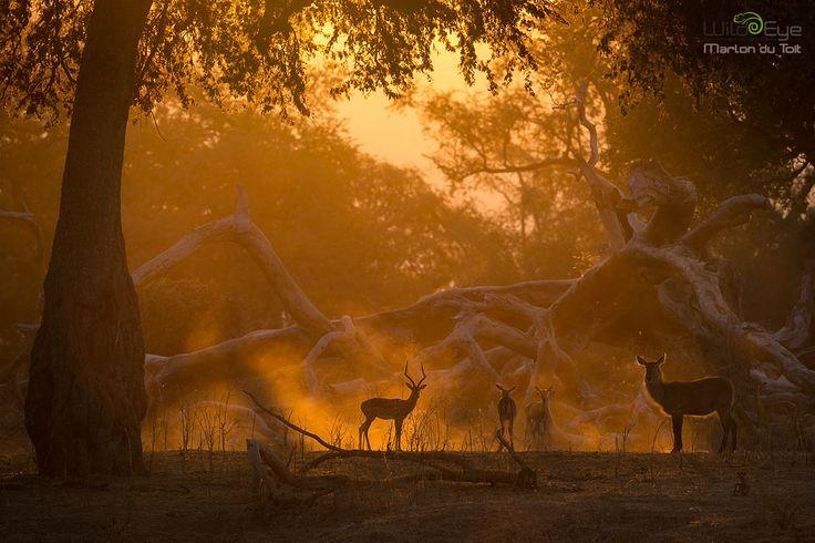 Mana Pools, Photo Safari, Marlon du Toit, Wild Eye