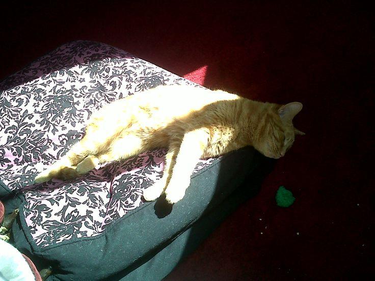 Ginga Sleeping cat