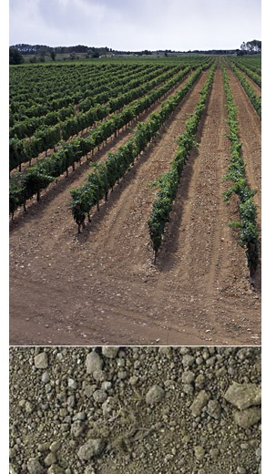 PONT DE MOLINS. 38 hectáreas de terreno llano, arenoso y con ligero contenido de limos. Las cepas tienen una edad de entre quince y veinte años. Los vinos que proceden de esta finca destacan por la elegancia de sus taninos.