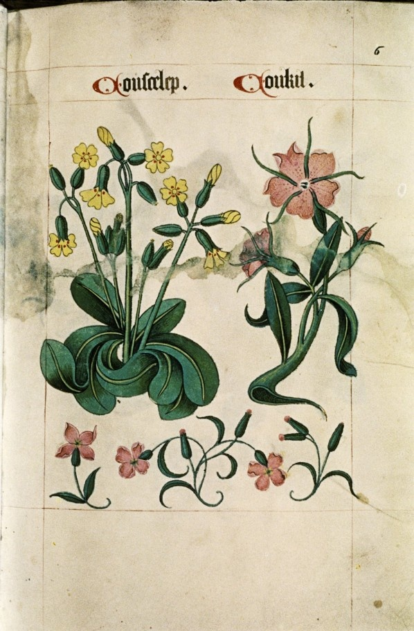 Tudor Herbal,1520 - Retronaut
