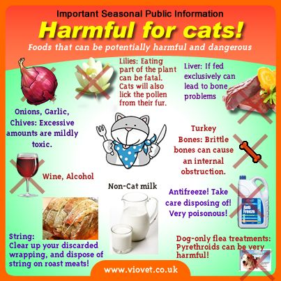 What Foods Are Dangerous For Cats