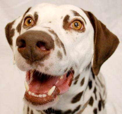 My dog Chip. Sharon, Phoenix, Arizona. 12/27/12.