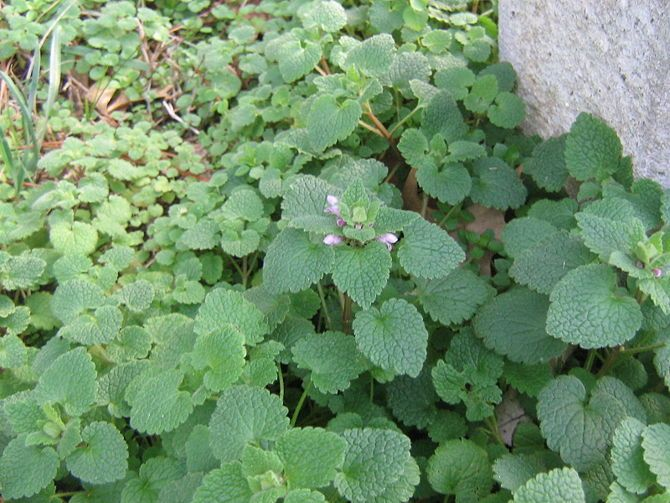 How to Find Wild Edible Plants: 15 Steps (with Pictures)...just in case you know I'm stuck in the wild or something