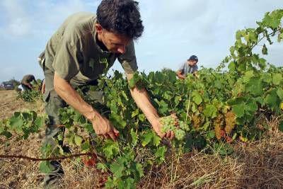 Morire di lavoro – Antonio, l'ultimo guerriero suicida