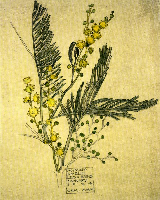 i fall in love with a botanical drawing by CRM/MMM, then realize i've spent time in this small town (amélie les bains). perfect!