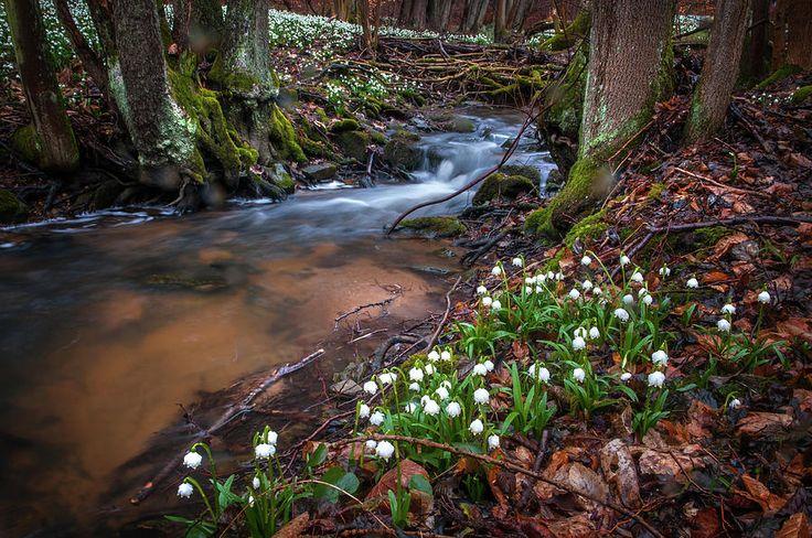Fragile Spring Wonders by Jenny Rainbow