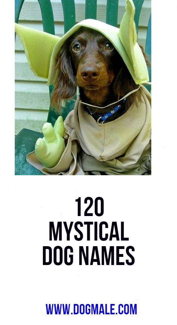 120 Mystical Dog Names   dog names   Dog names, Dogs, Dog list