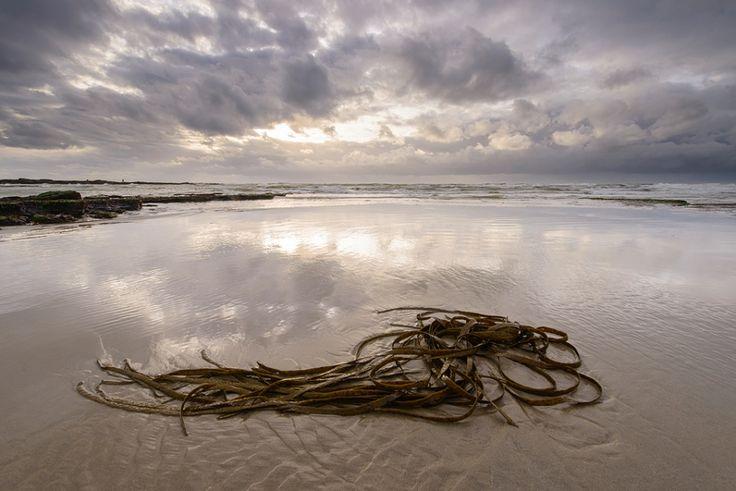 Seaweed - Audresselles, France