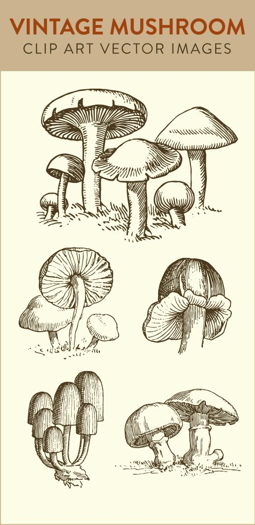 mushroom clip art, vintage mushroom, vector art clipart, royalty free images, download stock images, art vector, free stock images, images royalty free,