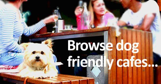 Dog friendly cafes and beaches