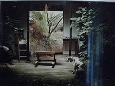 Lucian Freud's garden studio with Eli, 2006. Photo by David Dawson.