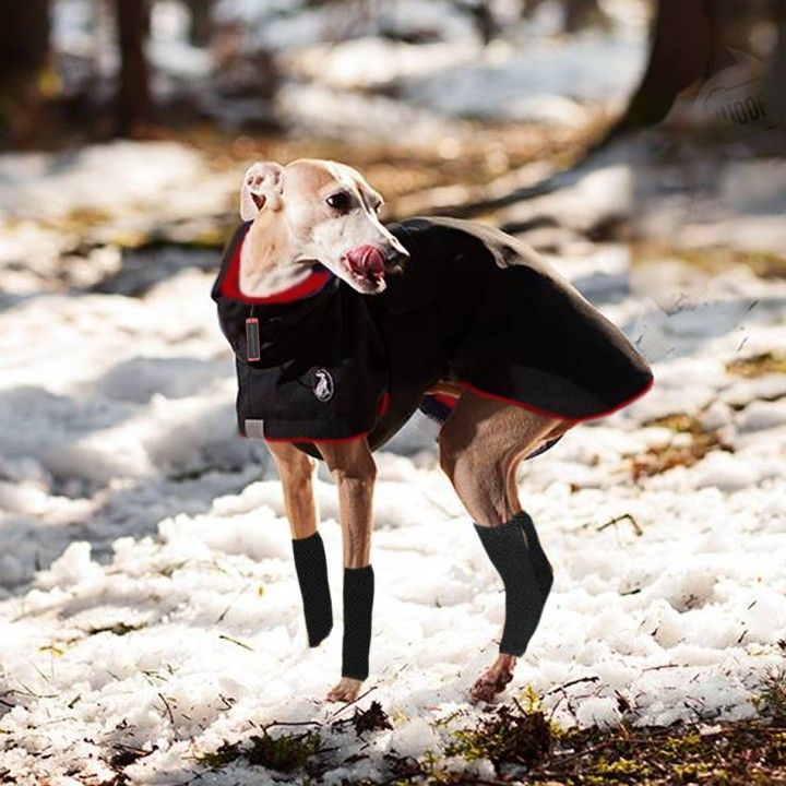 Italian Greyhound Dog Collars