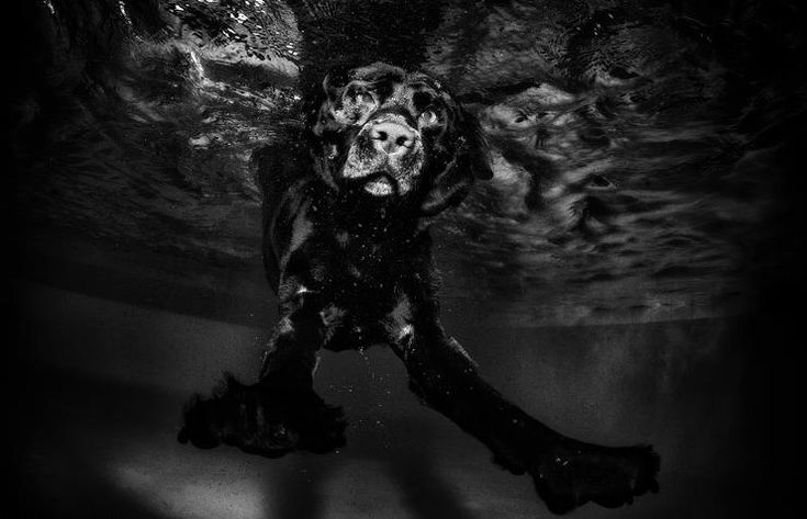 Underwater dog series from photographer Seth Casteel (http://www.littlefriendsphoto.com/)