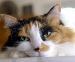 Can Cats And Dogs Drink White Vinegar