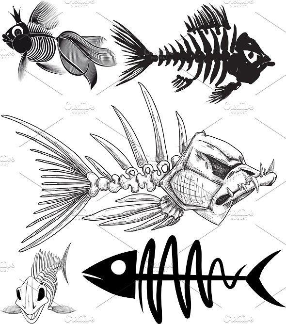 Skeleton Of Five Different Fish Fish Drawings Skeleton Drawings Fish Art