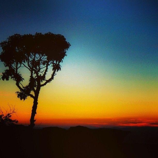 Árvore solitária no Cruzeiro de São Tomé das Letras. Mande sua foto para #desviantes. #aventura #saotomedasletras #saotome #viagem