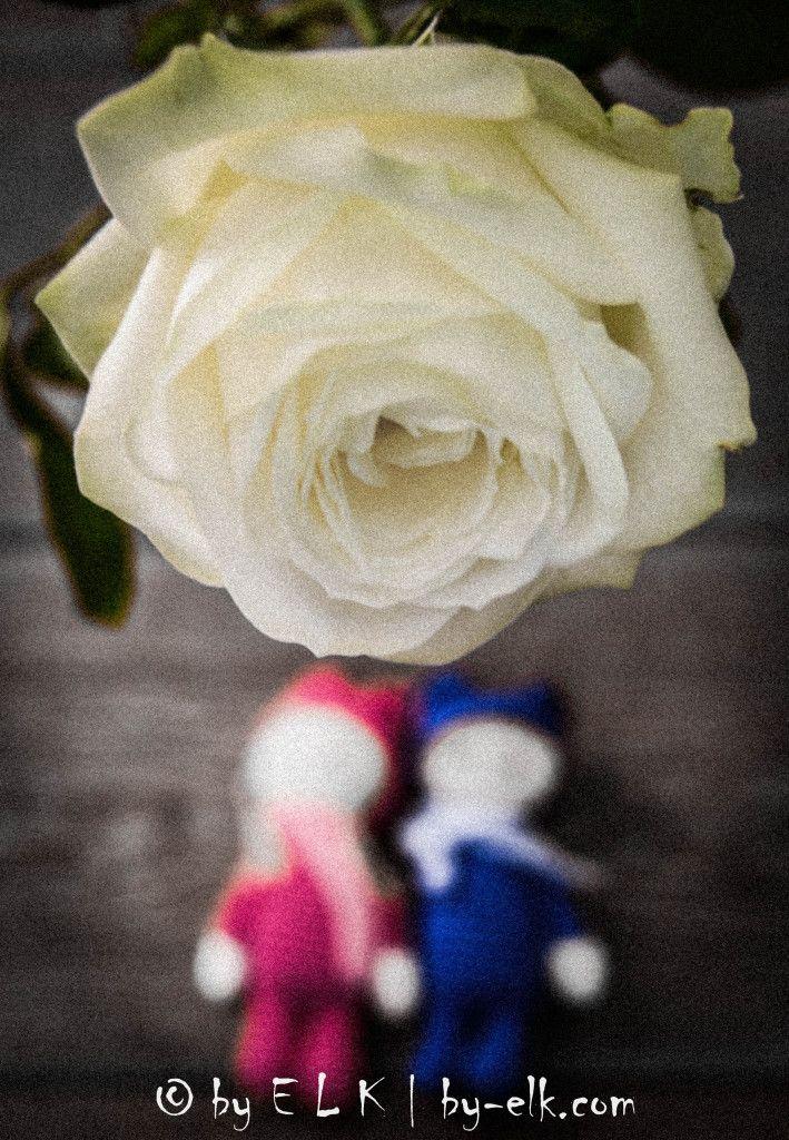 Een #roos als #houvast… Photo #byELK, Erika Ligthart-Kordas