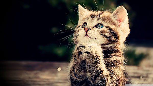 تحميل 100 صورة خلفيات قطط رائعة وعالية الدقة مداد الجليد Kittens Cutest Animals Animal Pictures