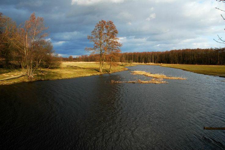 Narew river in Kiermusy (Poland)