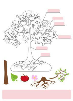 Parts of Tree.Clipart.Tree structure trunk, root, branch, fruit, leaf, root from Alefclipart on TeachersNotebook.com (18 pages)