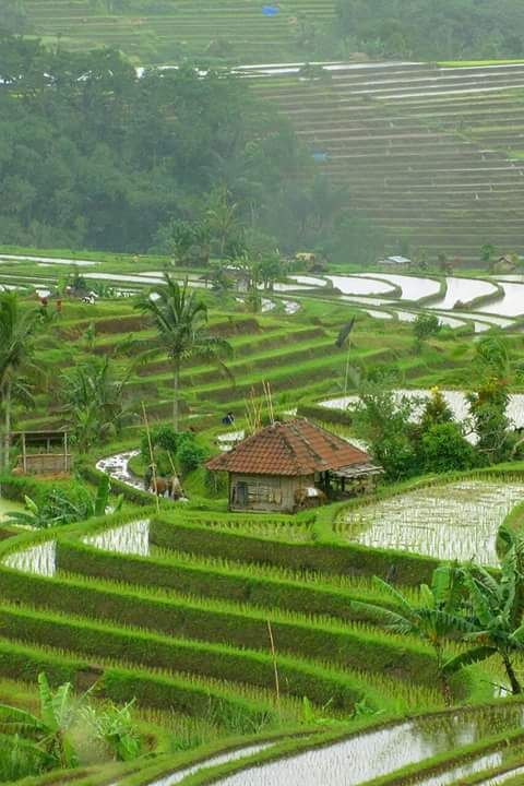 Tabanan Regency in Bali, the Jatiluwih rice fields