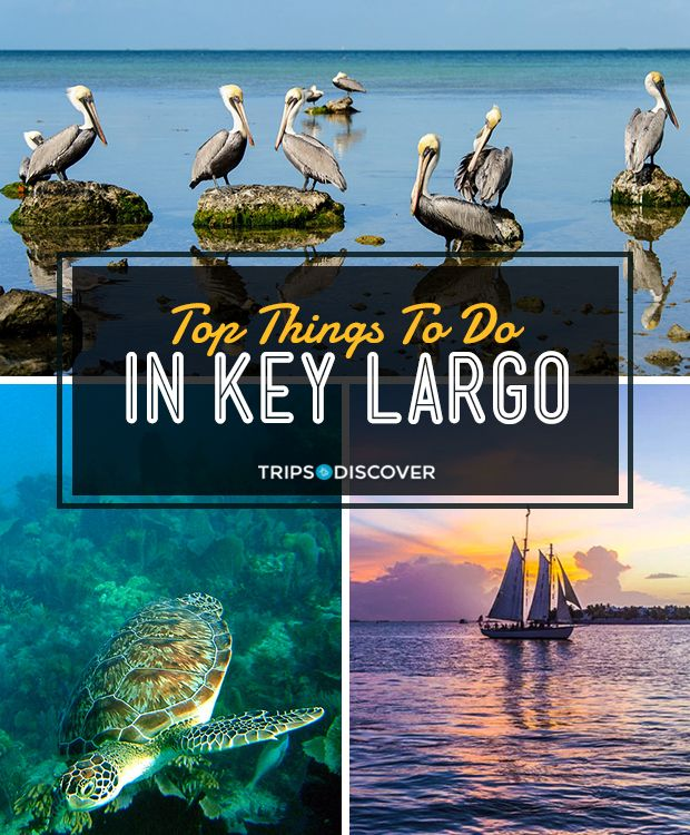 Top 10 Things To Do In Key Largo In 2020 Florida Travel Destinations Florida Travel Outdoor Adventure