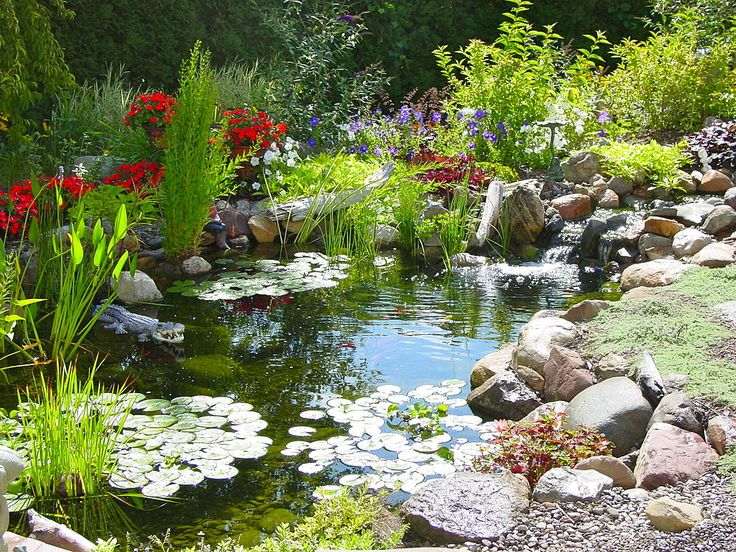 Can anyone give me some good reasons to get a pond? Just asking.........