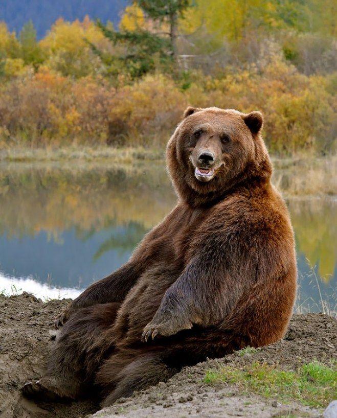 оппоненты смешные фото с медведями молодой