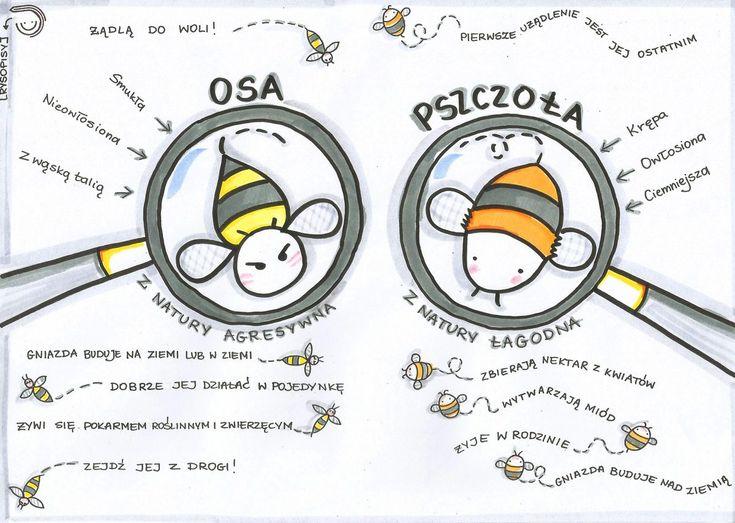 Osa vs pszczoła