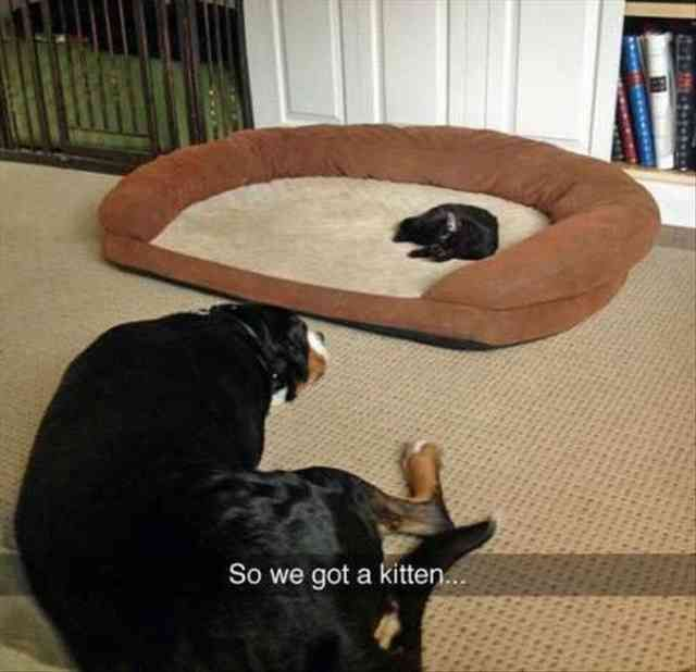 20 Funny Animal Pictures Of The Day. This is what our cat's did to our dog. While they took the big bed, he took the small bed.