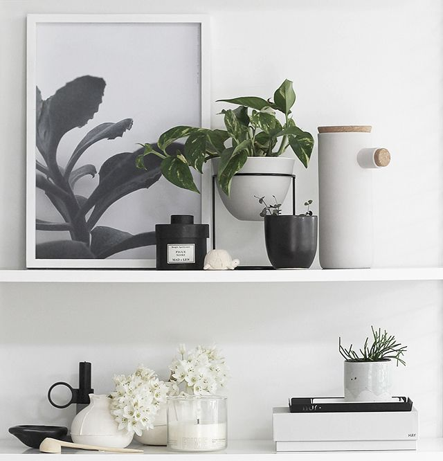 T.D.C | New Plants on my Shelf from Sill_life