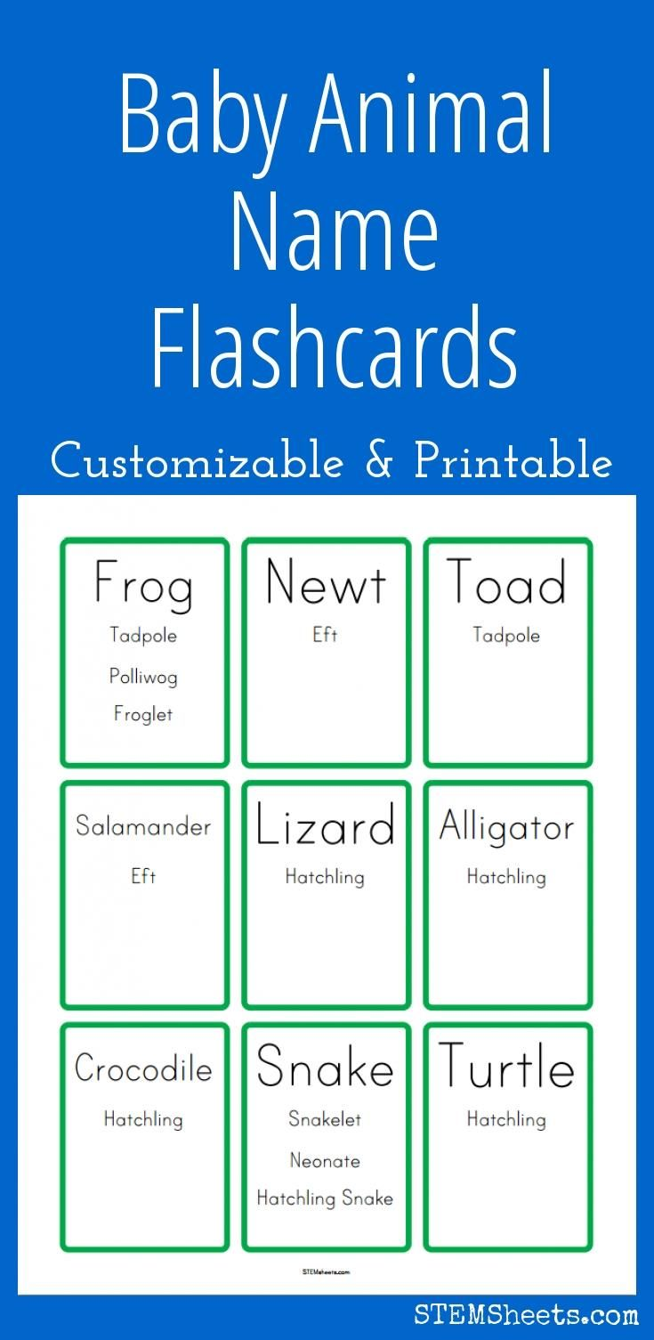39 best science stem resources images on pinterest school brain baby animal name flashcards customizable and printable gamestrikefo Gallery