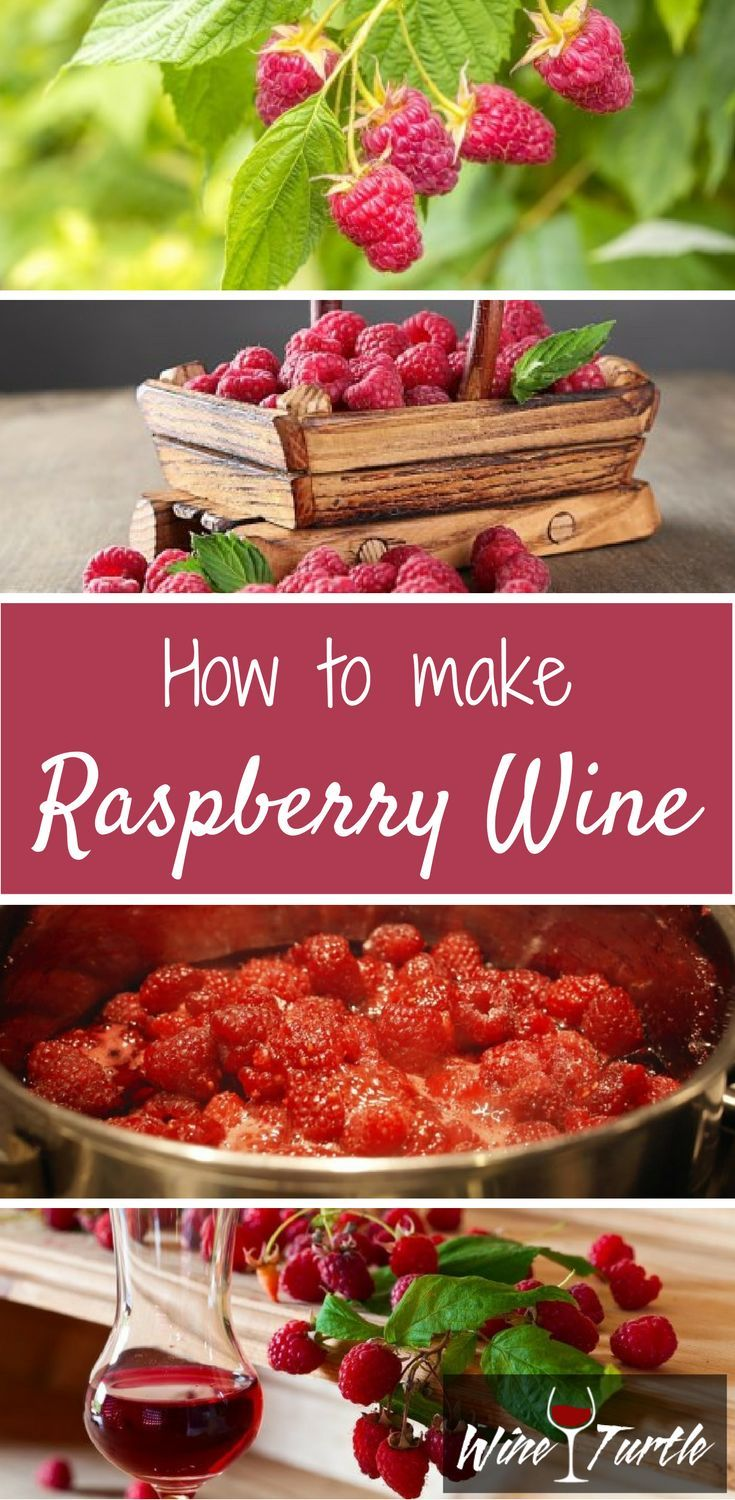 Looking For A Step By Step Guide On How To Make Raspberry Wine Look No Further Wine Turtle Has All Raspberry Wine Recipes Wine Recipes Homemade Wine Recipes