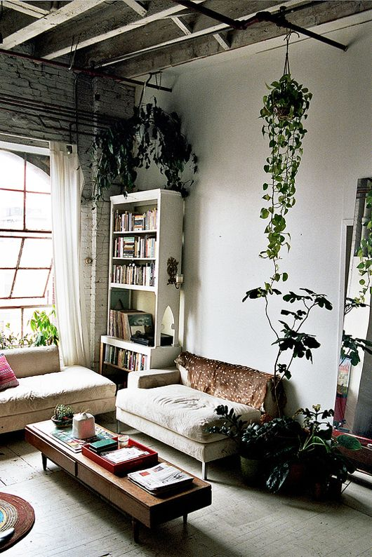 the shutterbugs: brian w. ferry / sfgirlbybay Hanging plants. And bare walls, of course.