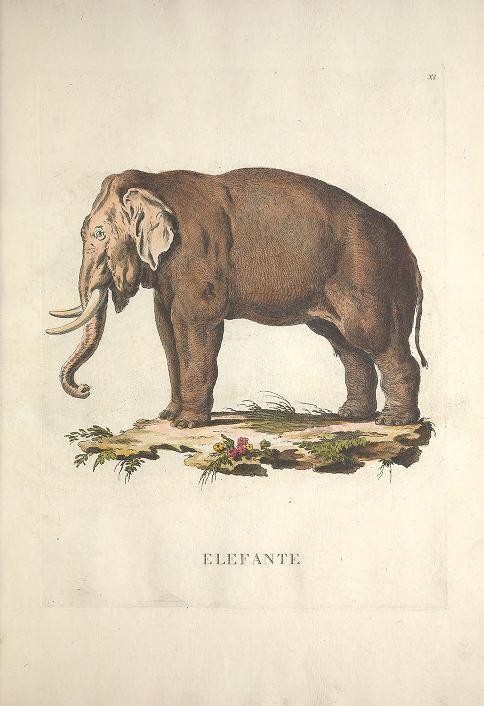 v. 1 - Descrizioni degli animali : - Biodiversity Heritage Library