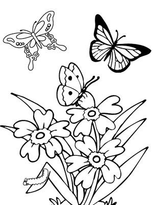 Colouring Pages Of Flowers And Butterflies : 912 best butterfly patterns images on pinterest