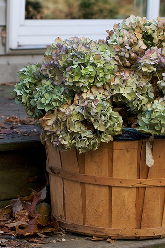 Best images about dried hydrangea arrangements on
