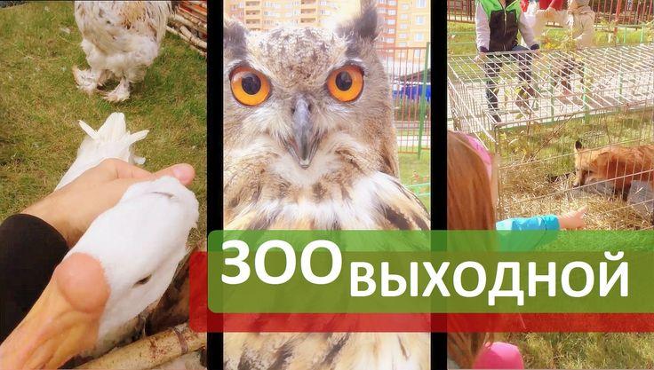ЖК Зеленые аллеи. Контактный зоопарк и детский праздник в Зеленых аллеях...