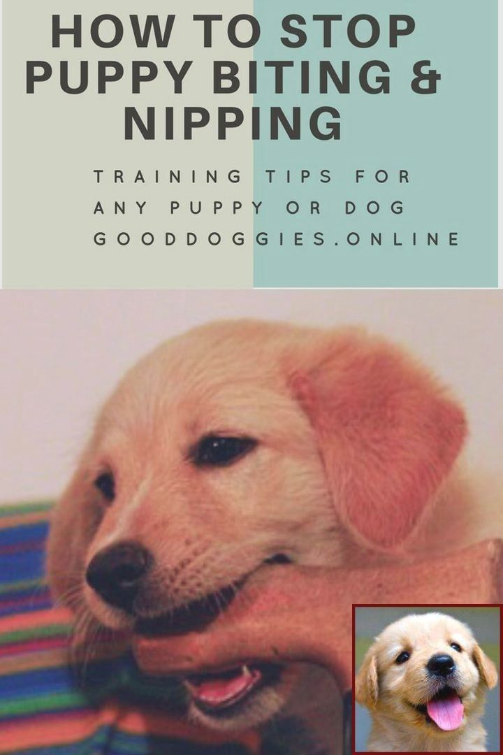 Dog Behavior On Prednisone And Dog Training Classes Petco Cost