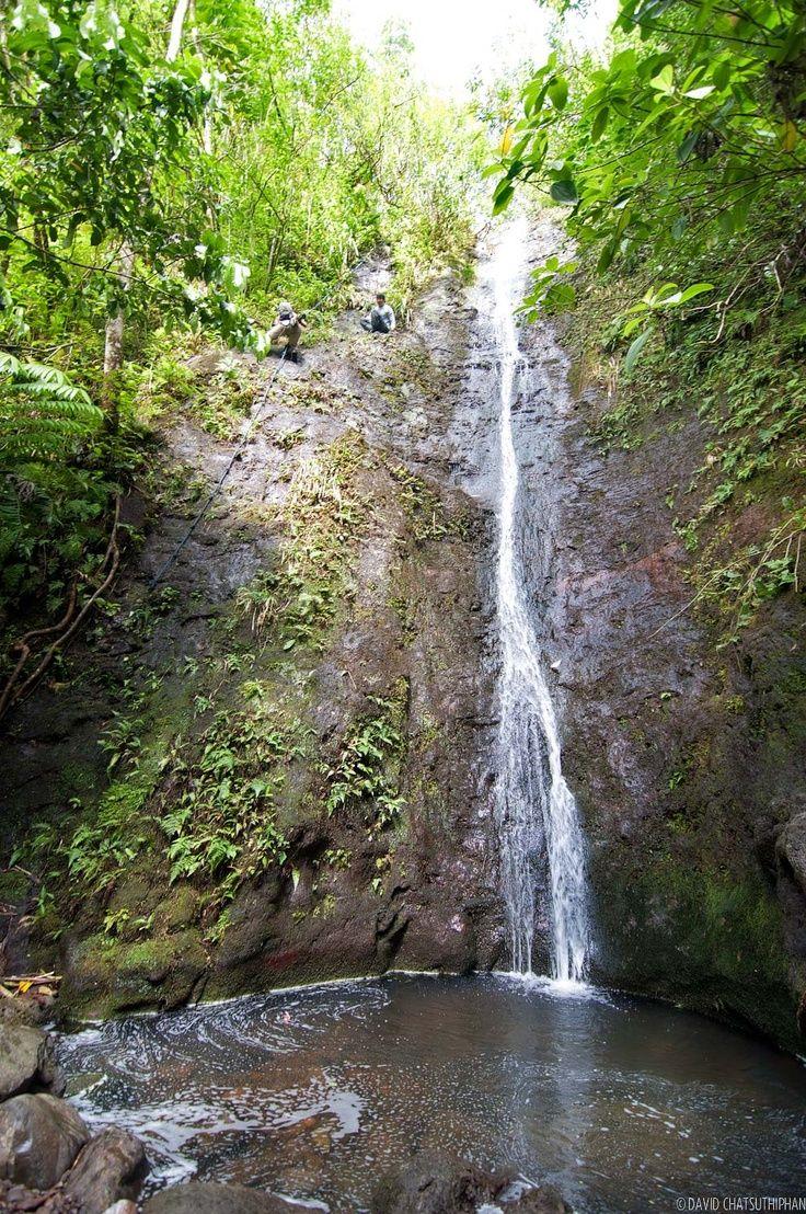 Manoa Falls Oahu   Manoa Falls, Oahu