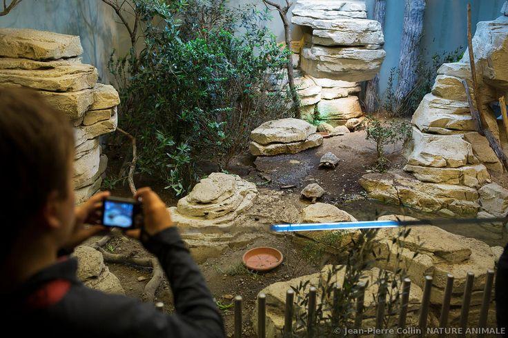 Vivarium avec tortues au zoo de Vincennes
