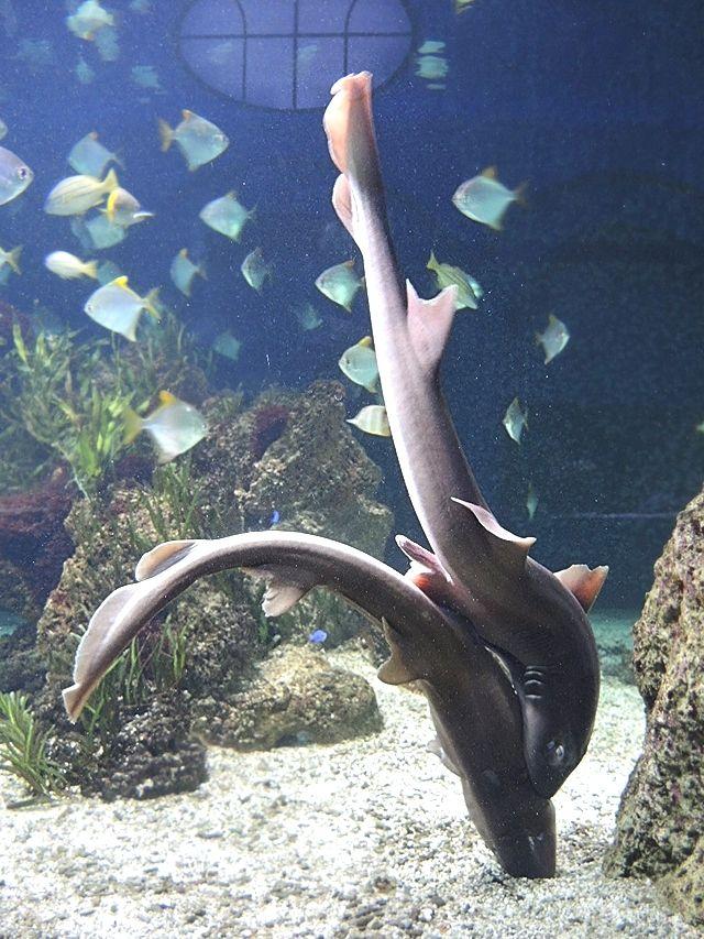 Moois van ' M(i)e': parende haaien, oranje sterren en viskens ...