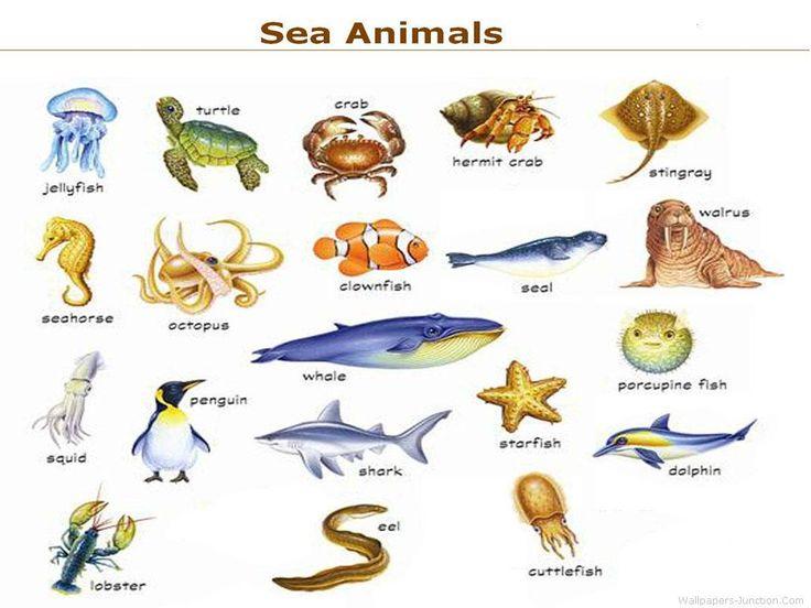 sea animals names cakepins com preschool stuff pinterest