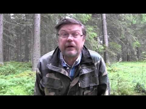 Kantarelli on suomalaisten suosikkisieni (video 2:13).