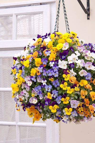 17 Best Ideas About Hanging Flower Baskets On Pinterest