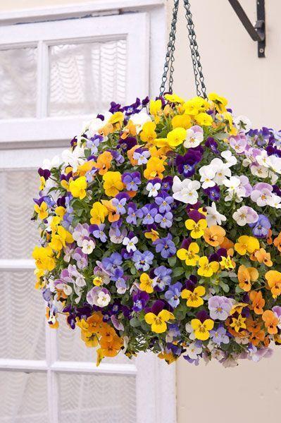 Hanging Flower Basket Supplies : Best ideas about flower baskets on hanging