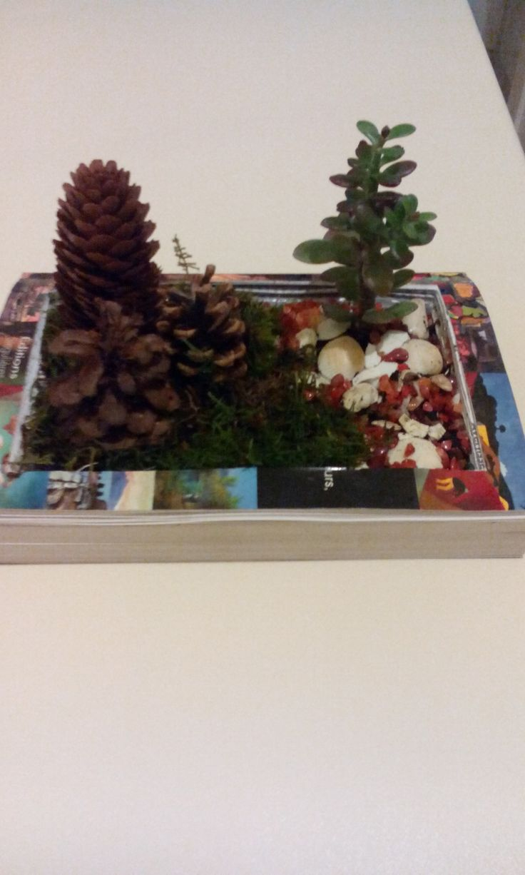 Aranjament cu plante suculente in carte