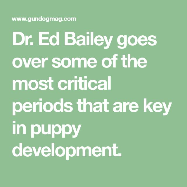 Dr. Ed Bailey goes over some of the most critical periods that are key in puppy development.