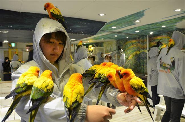 犬や猫にはない表情 「鳥まみれ」の世界へようこそ!  猫カフェに犬カフェ、ウサギカフェと外国人に人気の動物カフェ。中でも、他とは比べものにはならないほど、生き物とじゃれ合える「カフェ」がある。2014年、東京・浅草にオープンした「鳥のいるカフェ」。