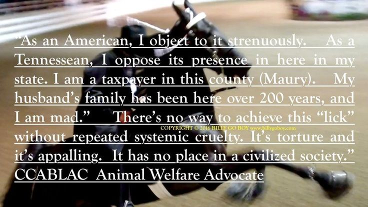 """We, The People""  respectfully petition you to please instruct Secretary of Agriculture,  Mr. ""Sonny"" Perdue, and OMB Director,  Mr. Mark Mulvaney,  to expeditiously review and publish the Federal Rule in the Federal Register to remove the   ""Pads and Chains""   from Tennessee Walking Horses.  This..."